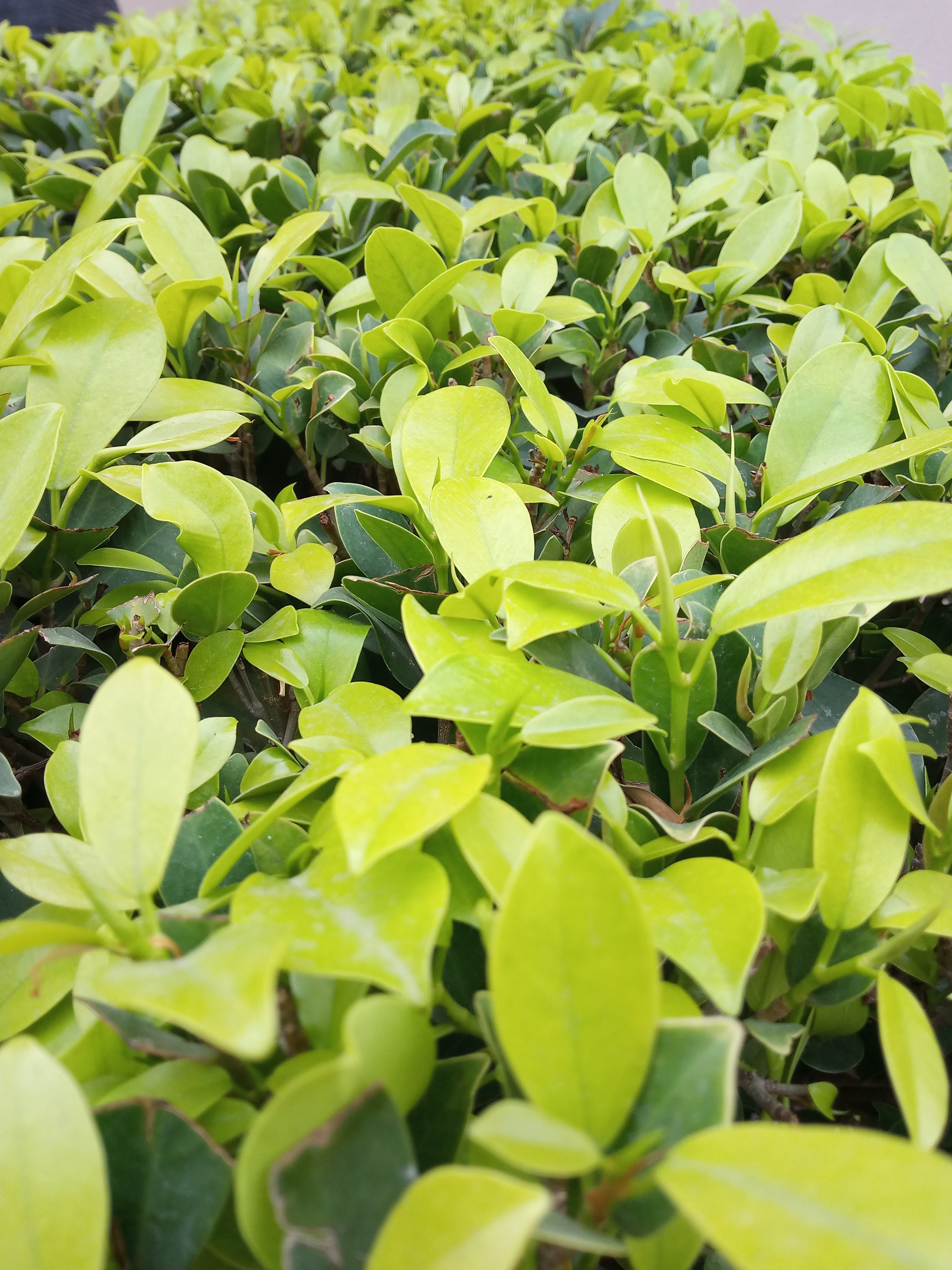 Free stock photo of daylight, garden, green, leaves