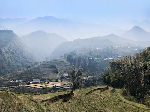 Бесплатное стоковое фото с вьетнам, голубое небо, голубой, дерево