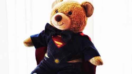 Kostenloses Stock Foto zu bär, baue einen bären, frau