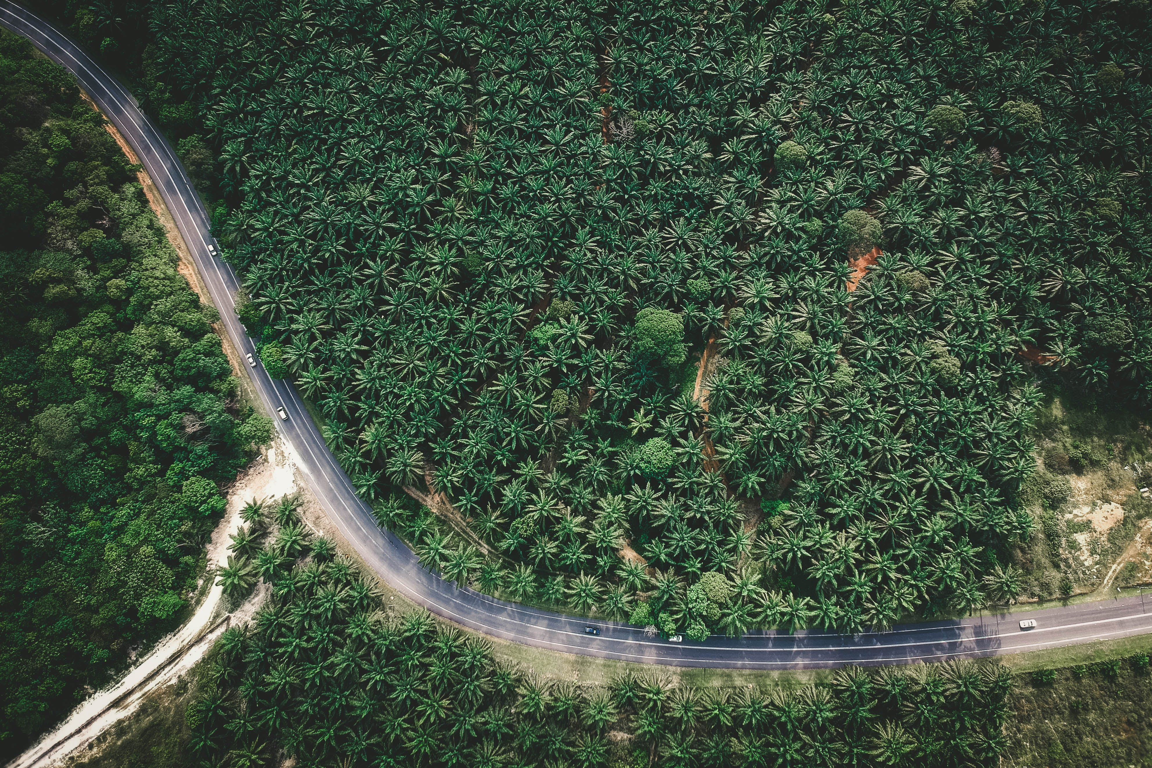 Free stock photo of road, landscape, nature, trees