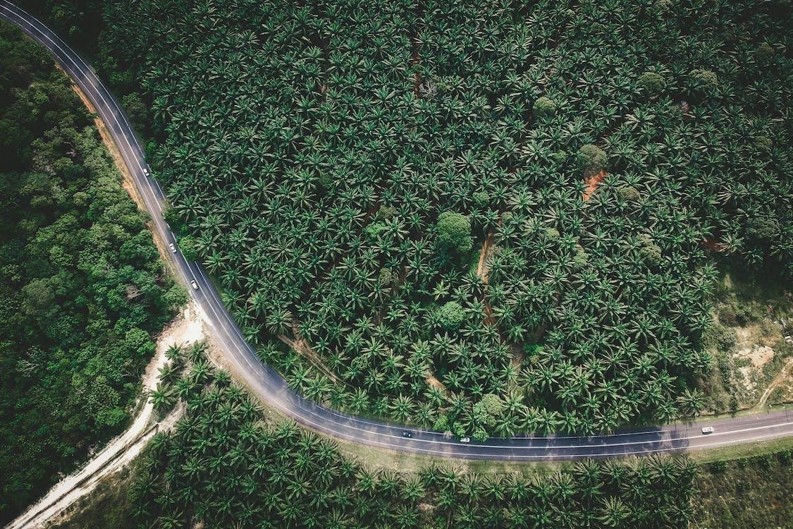 droga, drzewa, kolor