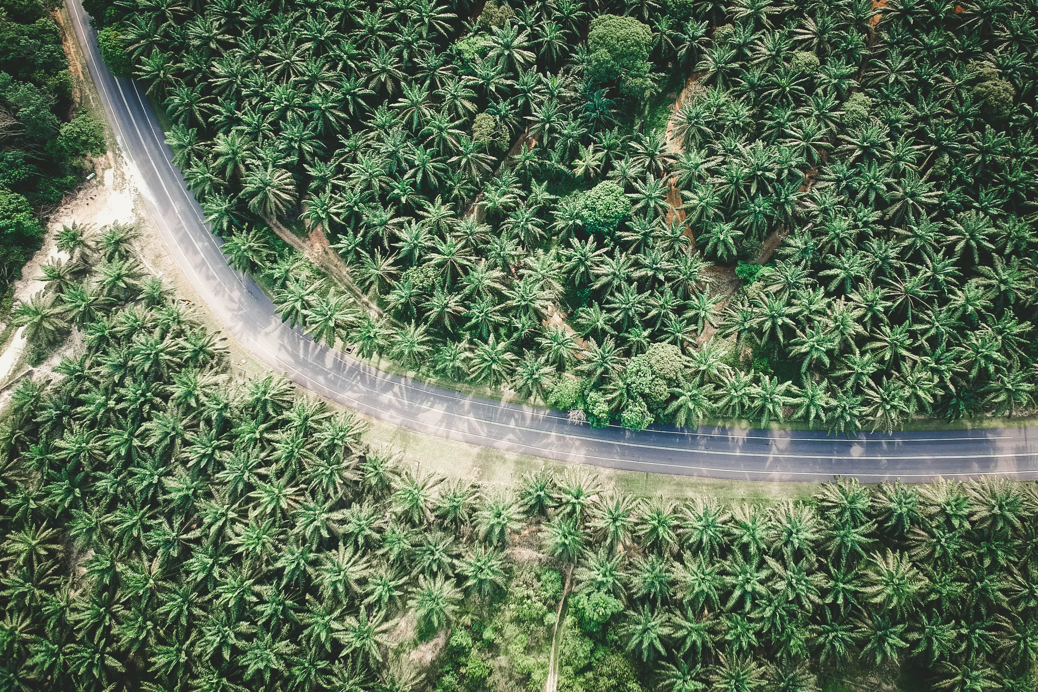 Aerial View of Highway Road Surrounded by Trees