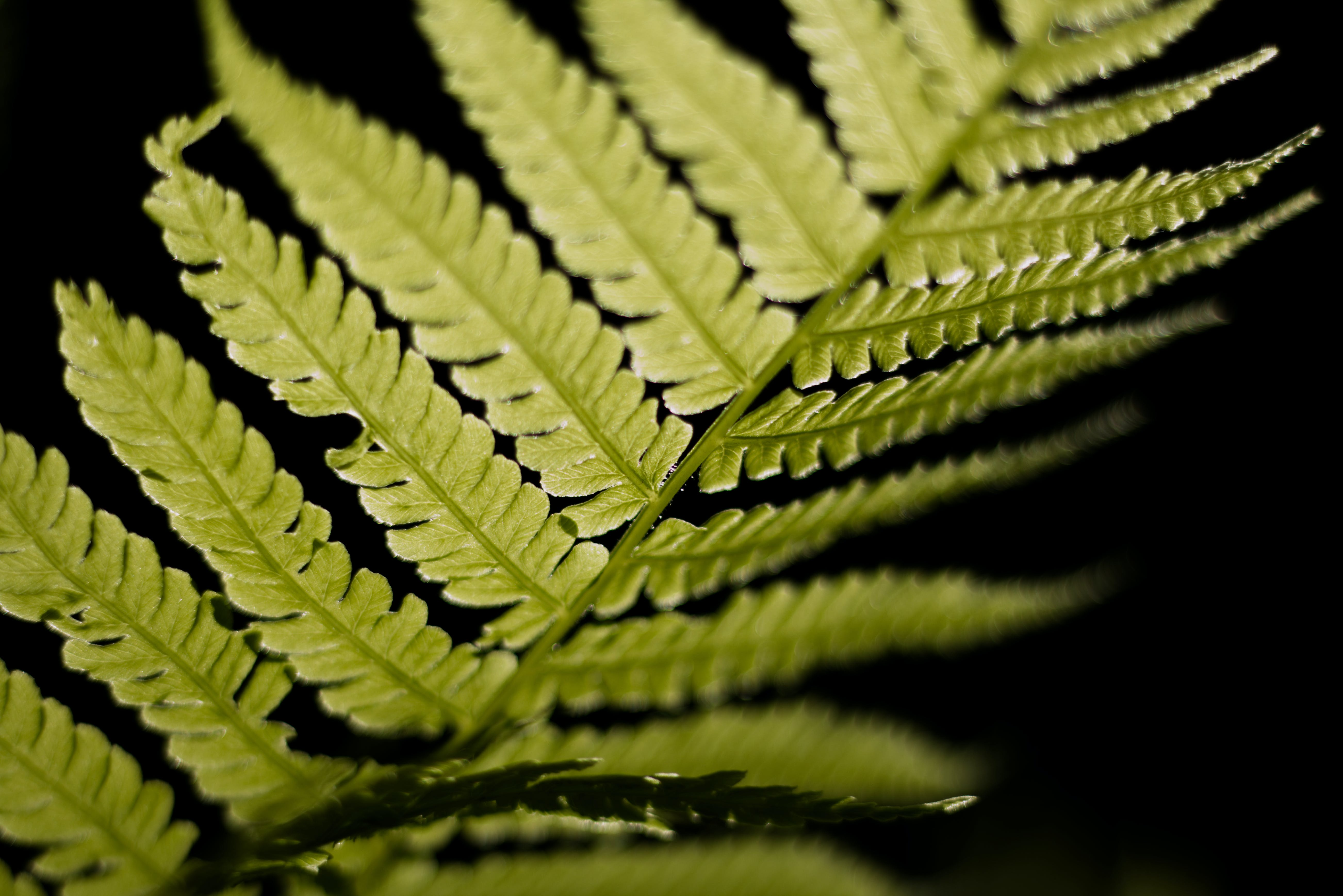 Selective Focus Photo of Linear Leaf Plant