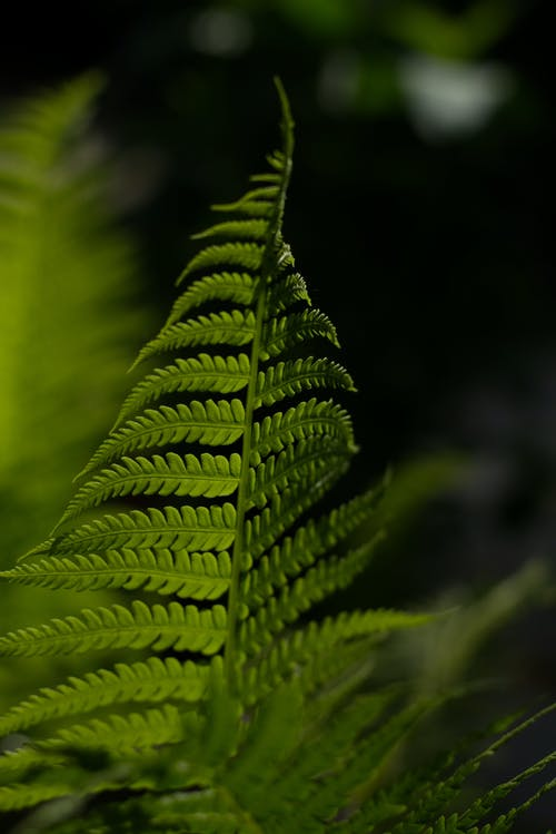 나뭇잎, 녹색, 매크로, 색깔의 무료 스톡 사진