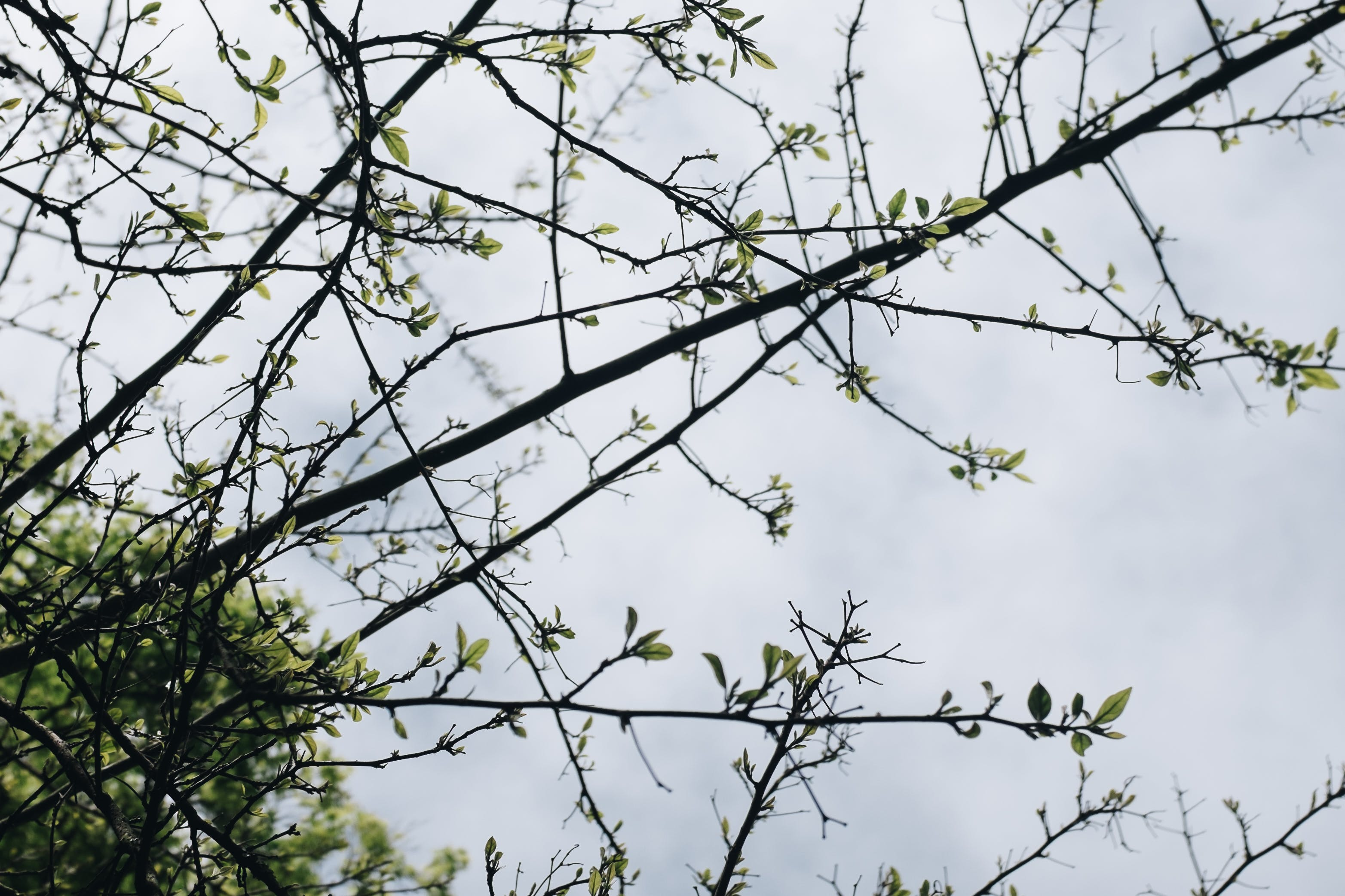 Green Leaf Tree Under White Clouds