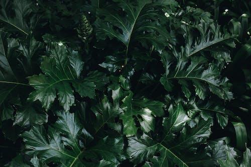Ảnh lưu trữ miễn phí về cận cảnh, lớn lên, màu xanh lá, môi trường