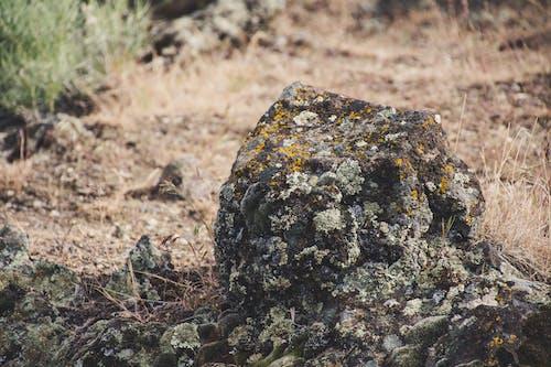 Gratis stockfoto met aarde, Bemoste rotsen, bodem, daglicht