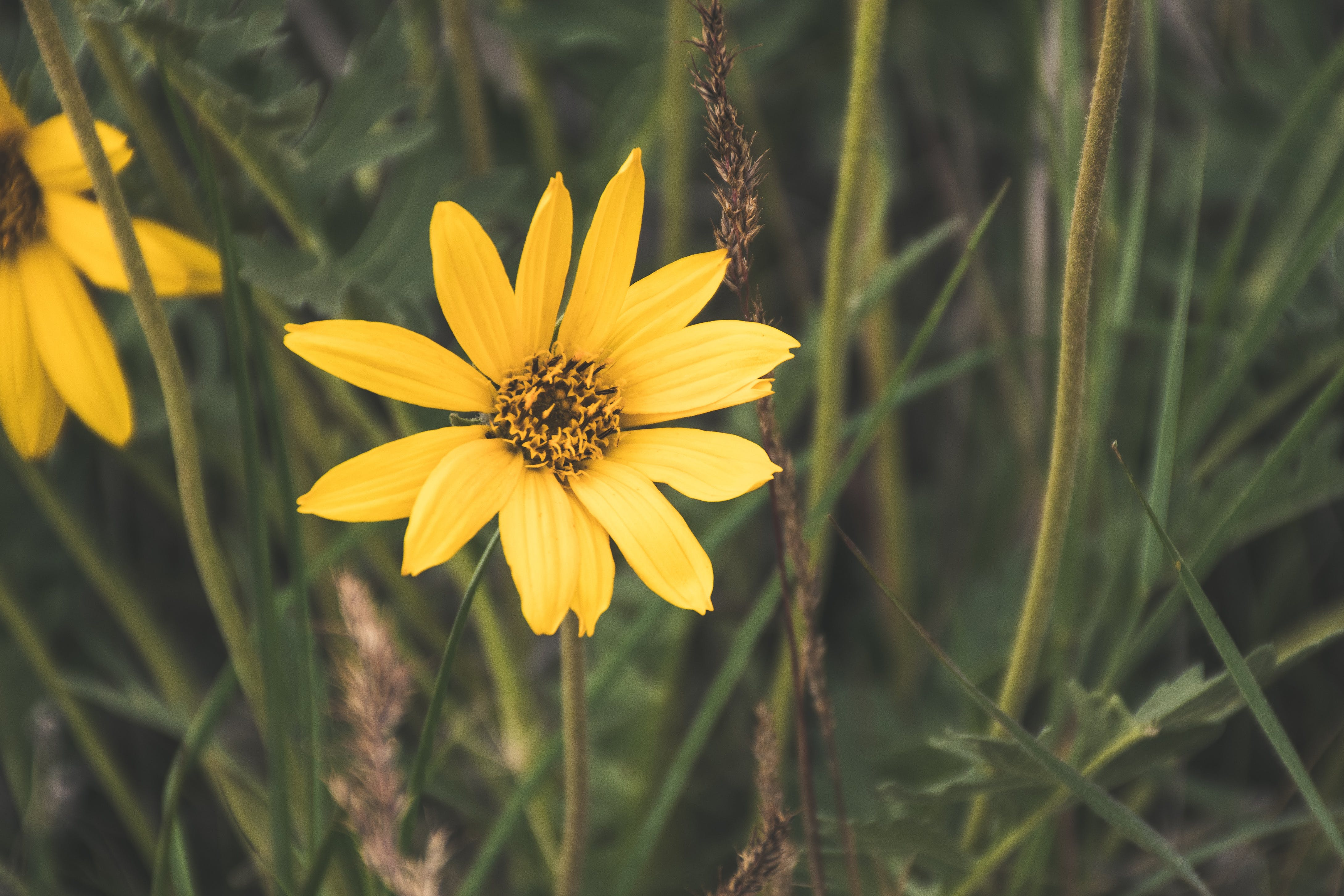 Foto stok gratis berbunga, berkembang, bidang, bunga kuning