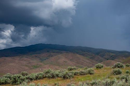 Foto d'estoc gratuïta de arbres, cel, herba, llum del dia