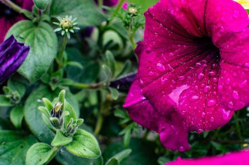 ぼかし, フォーカス, フローラ, 咲くの無料の写真素材