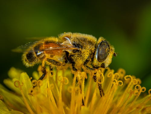 Macro Photography of Honey Bee on Petaled Flower