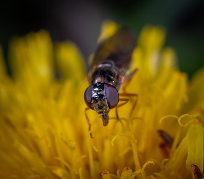 Black Fly on Yellow Petaled Flower