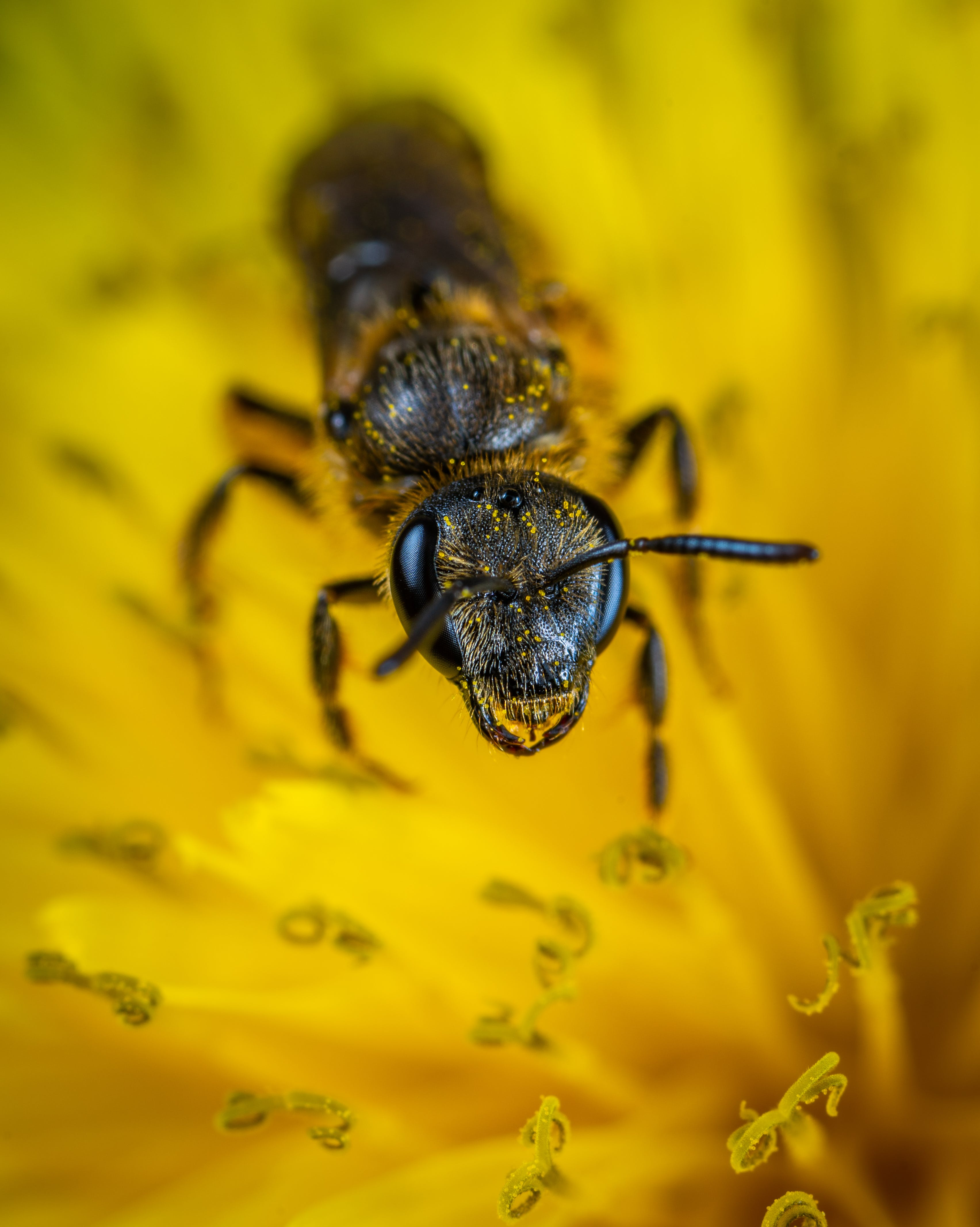Black Ant on Yellow Petaled Flower