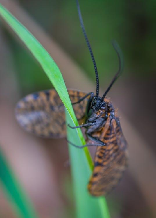 barva, bezobratlí, entomologie