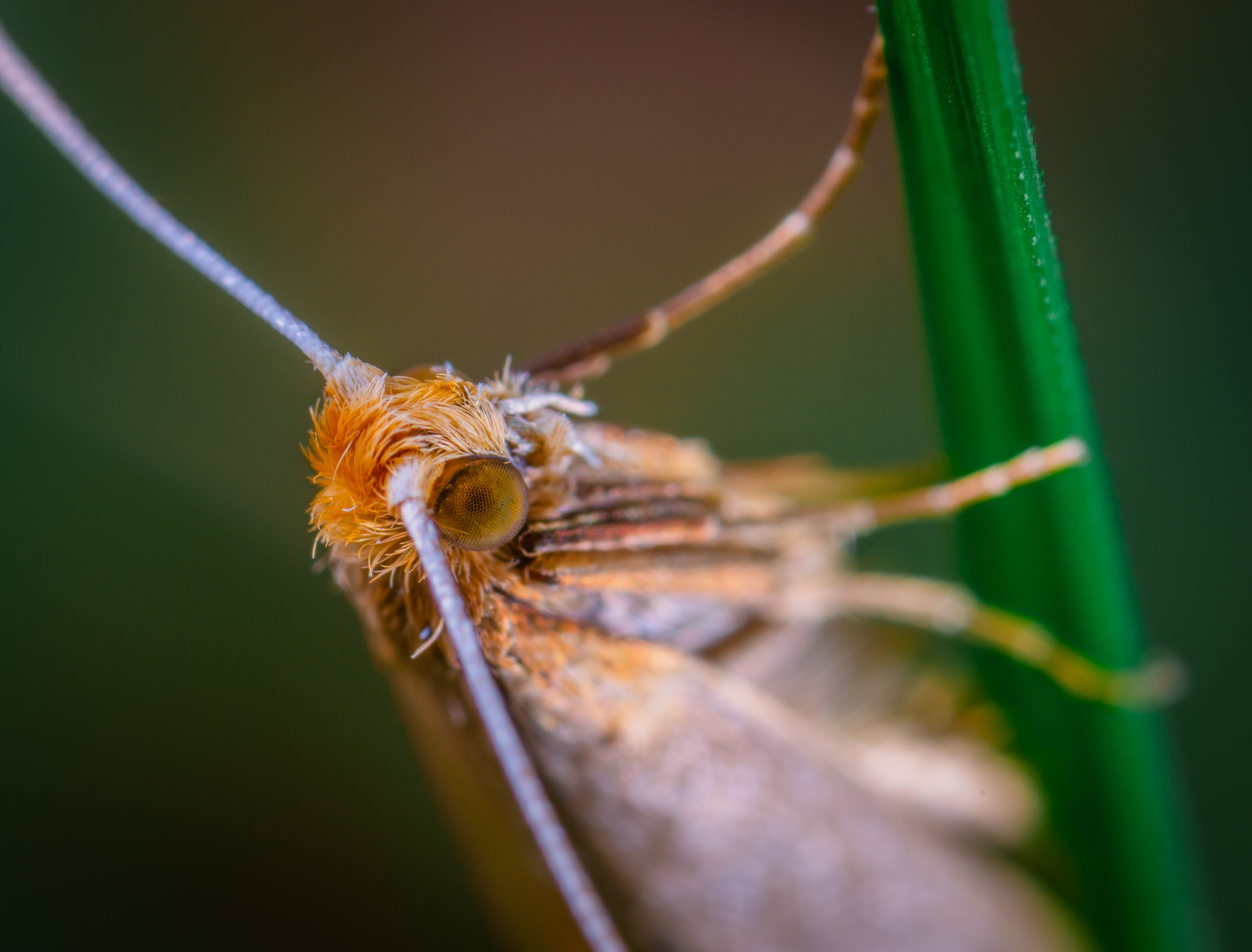 Brown Winged Insect on Green Leaf Plant