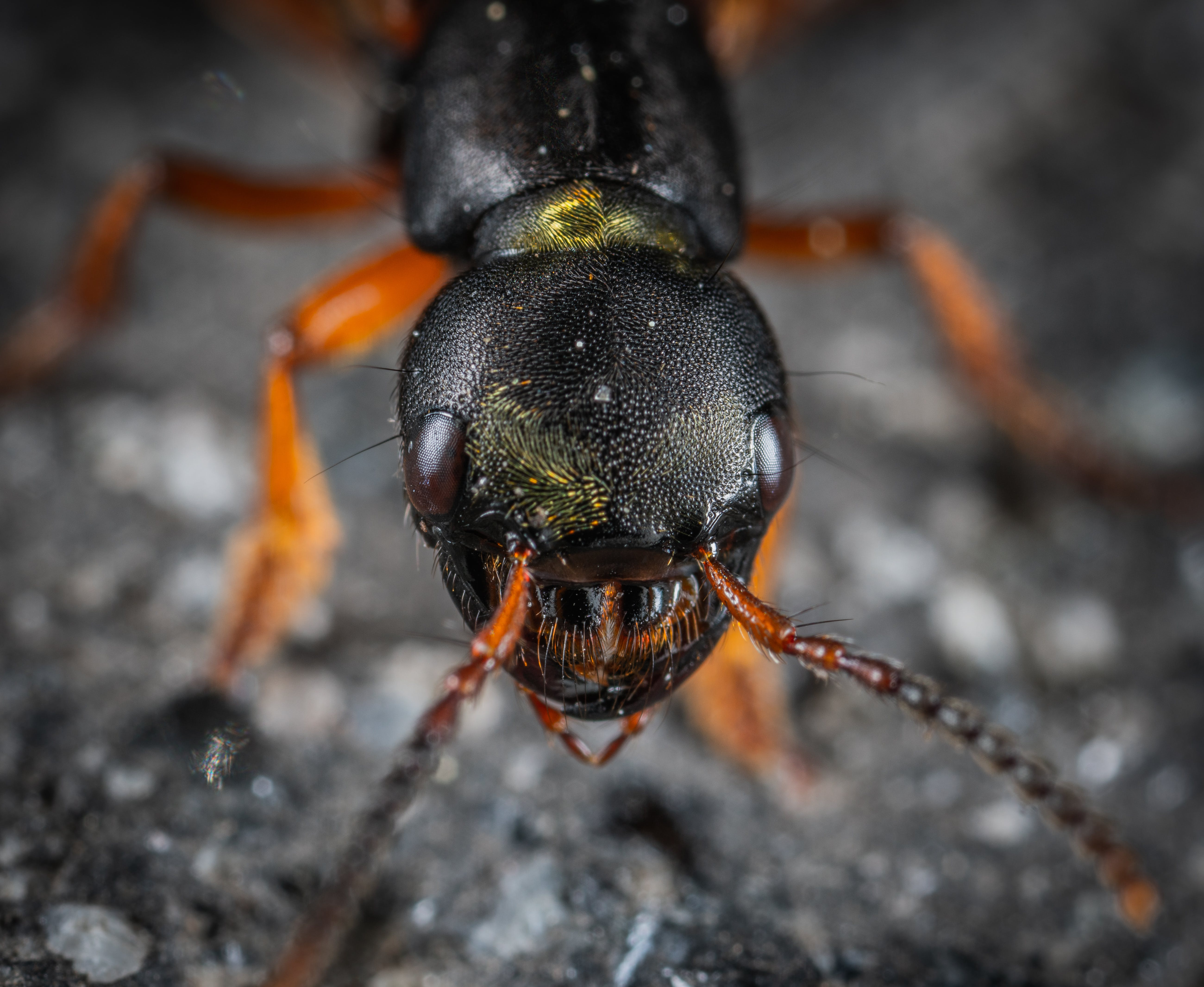 Macro Shot Photography of Insect Head