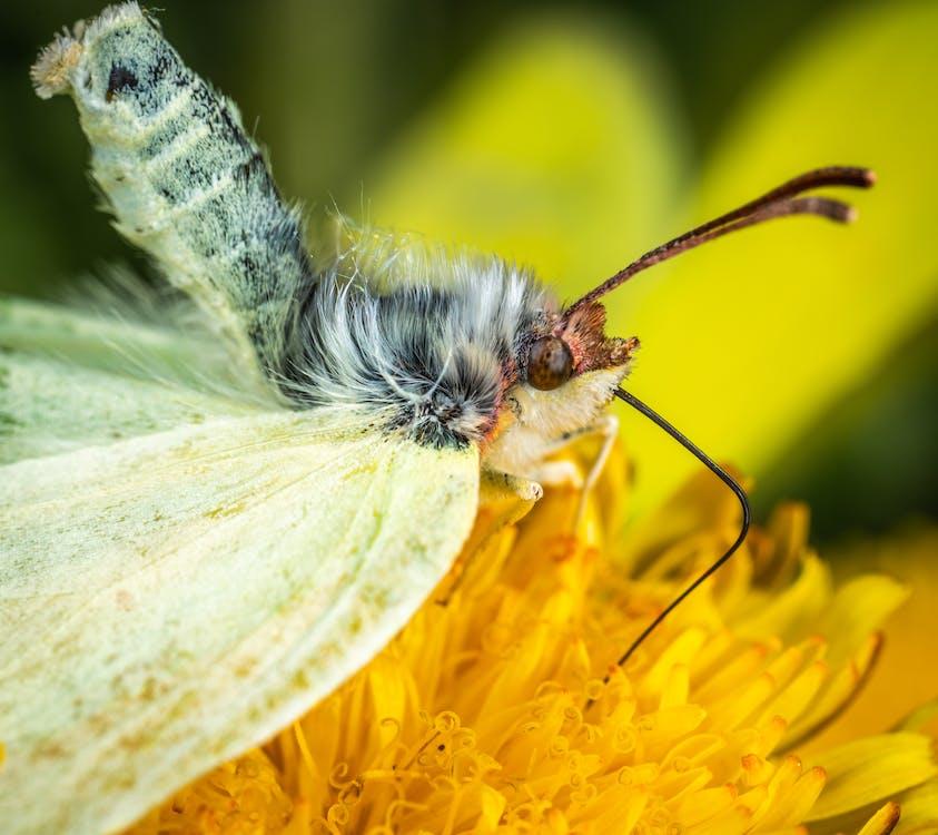 Butterfly on Yellow Petaled Flower