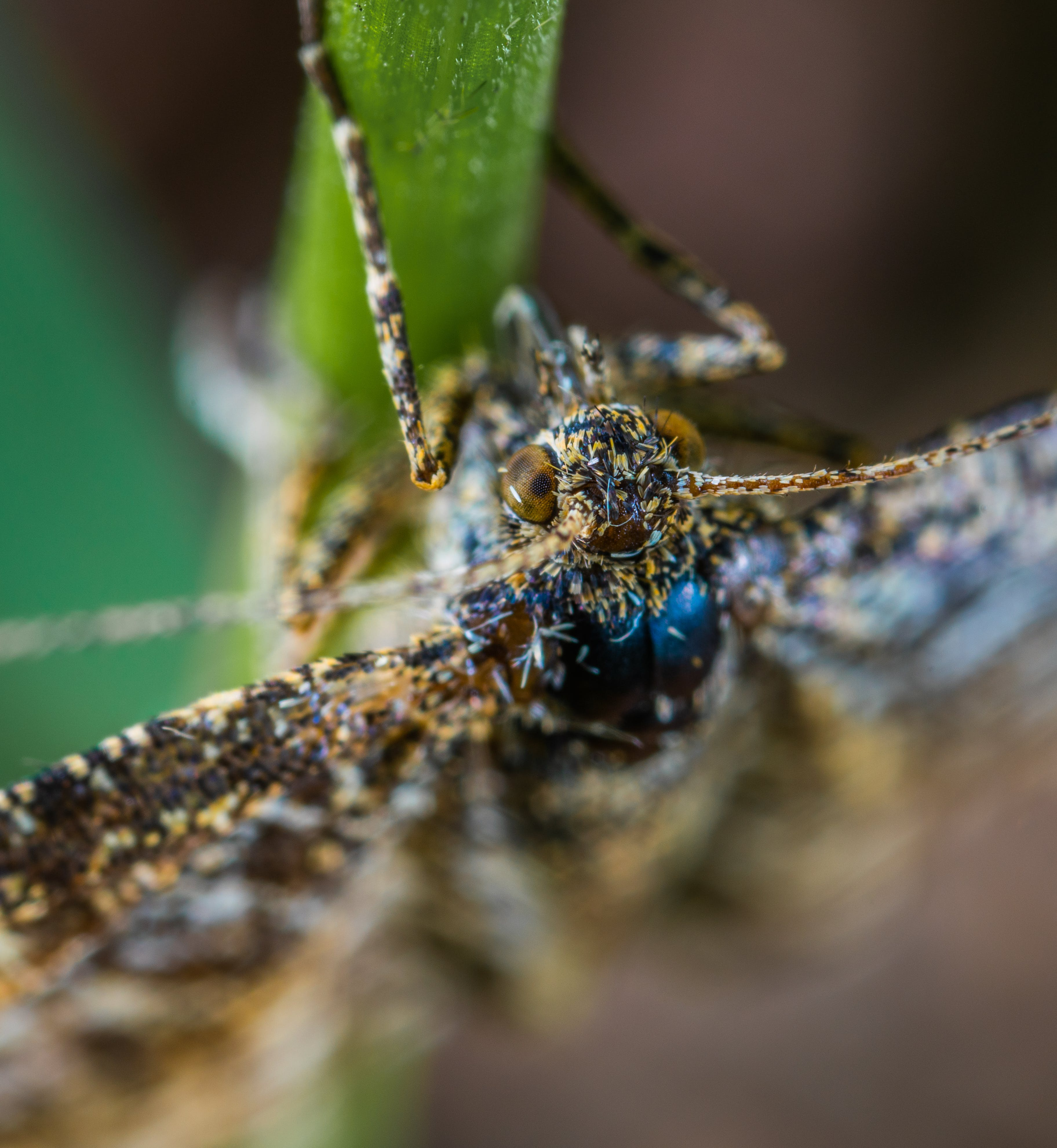 Close-up Photography of Brown Winged Insect on Leaf Stem