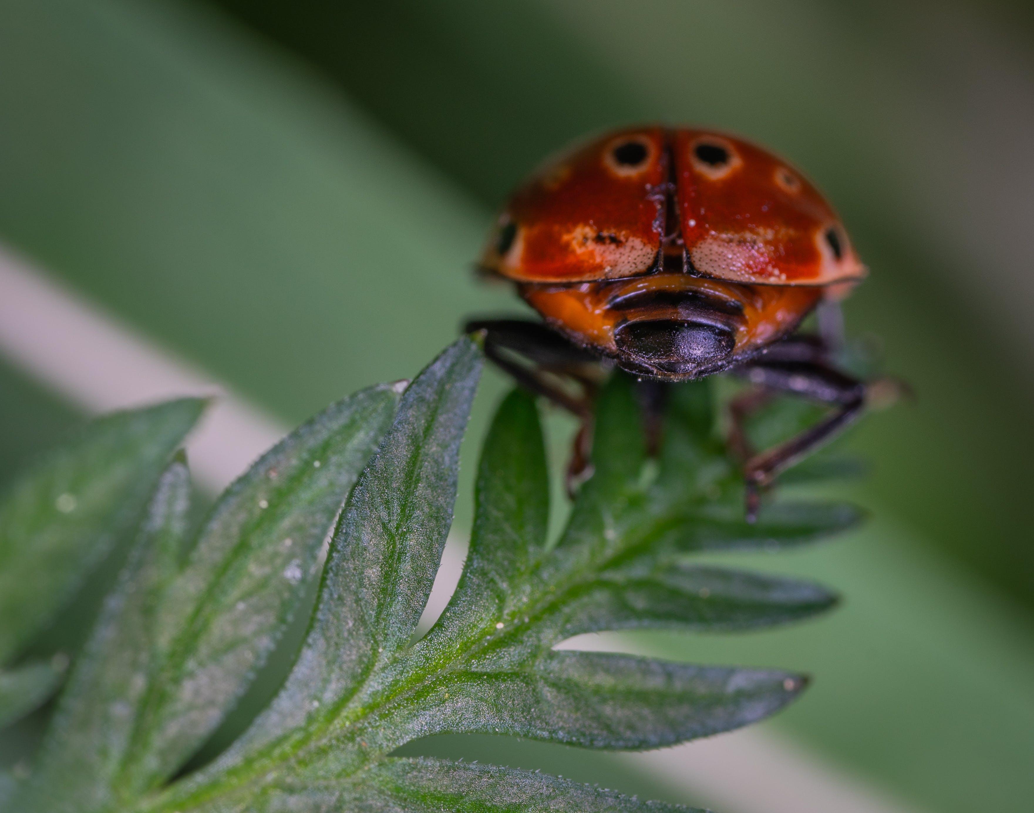 Gratis lagerfoto af Bille, close-up, farve, græs