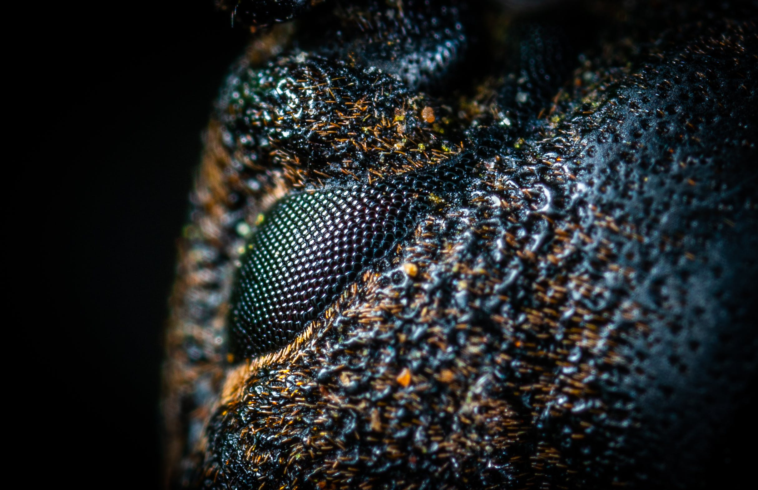 Macro-photography of Black and Brown Skin