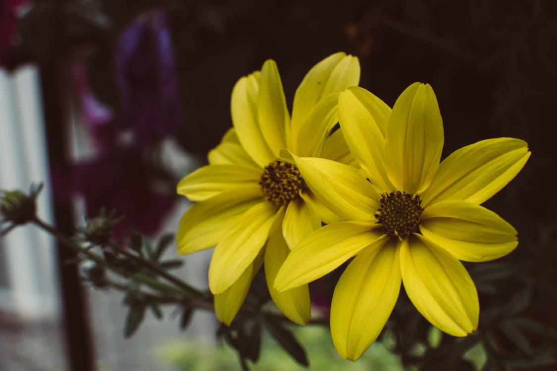 cận cảnh, cánh hoa, đẹp