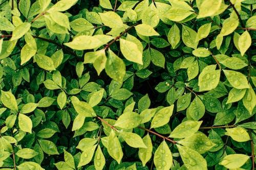 Kostenloses Stock Foto zu botanisch, farben, frische, grün