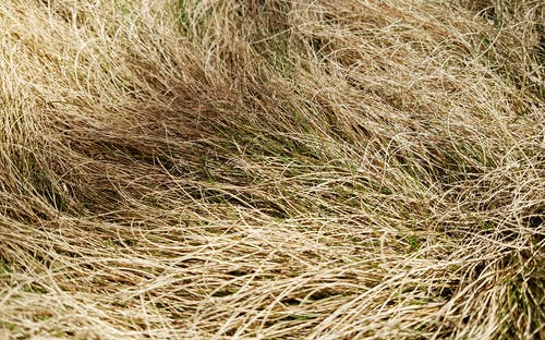 Free stock photo of background, grass, hay, wallpaper