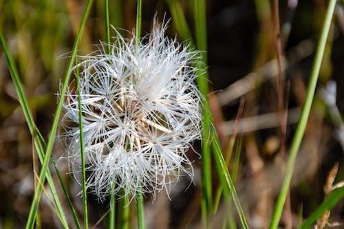 Bahçe, Beyaz çiçek, bitki örtüsü, büyüme içeren Ücretsiz stok fotoğraf