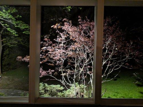 Free stock photo of nighttime, springtime, tree