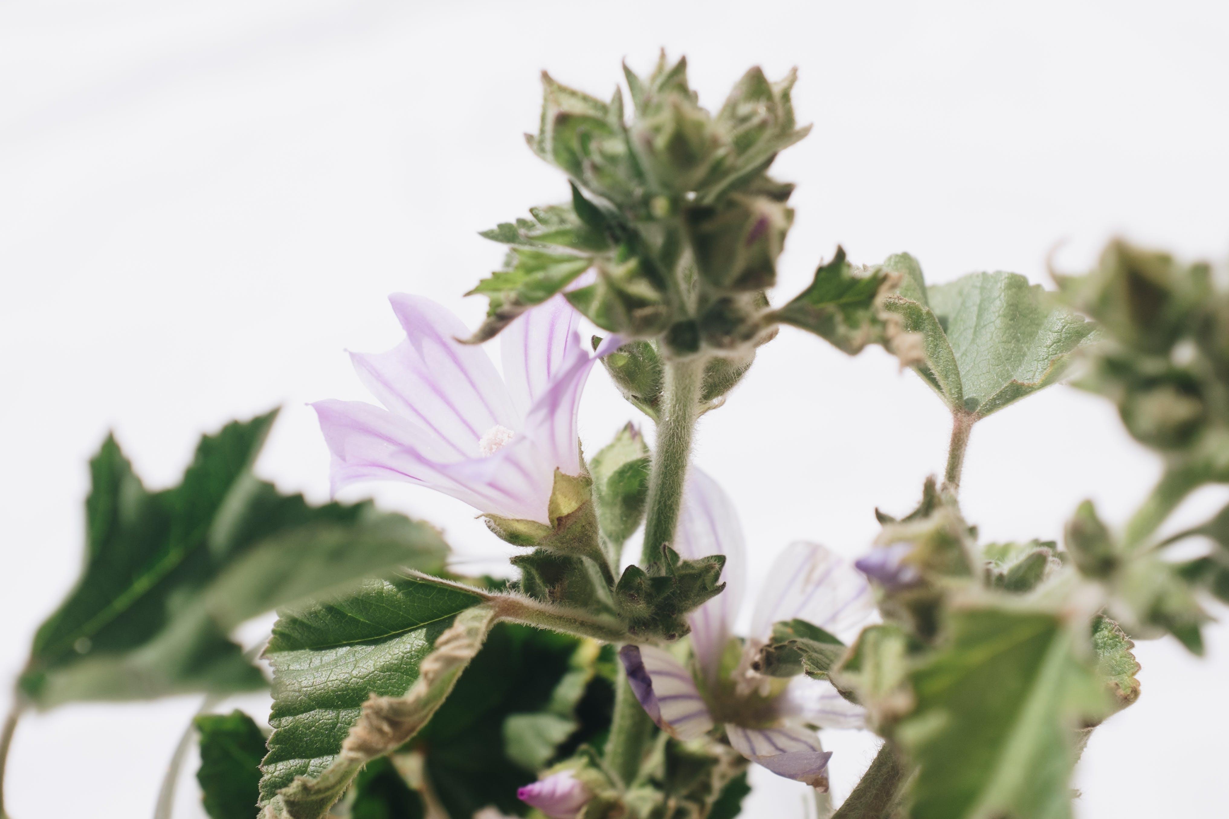 Kostenloses Stock Foto zu blühen, blumen, blütenblätter, botanisch