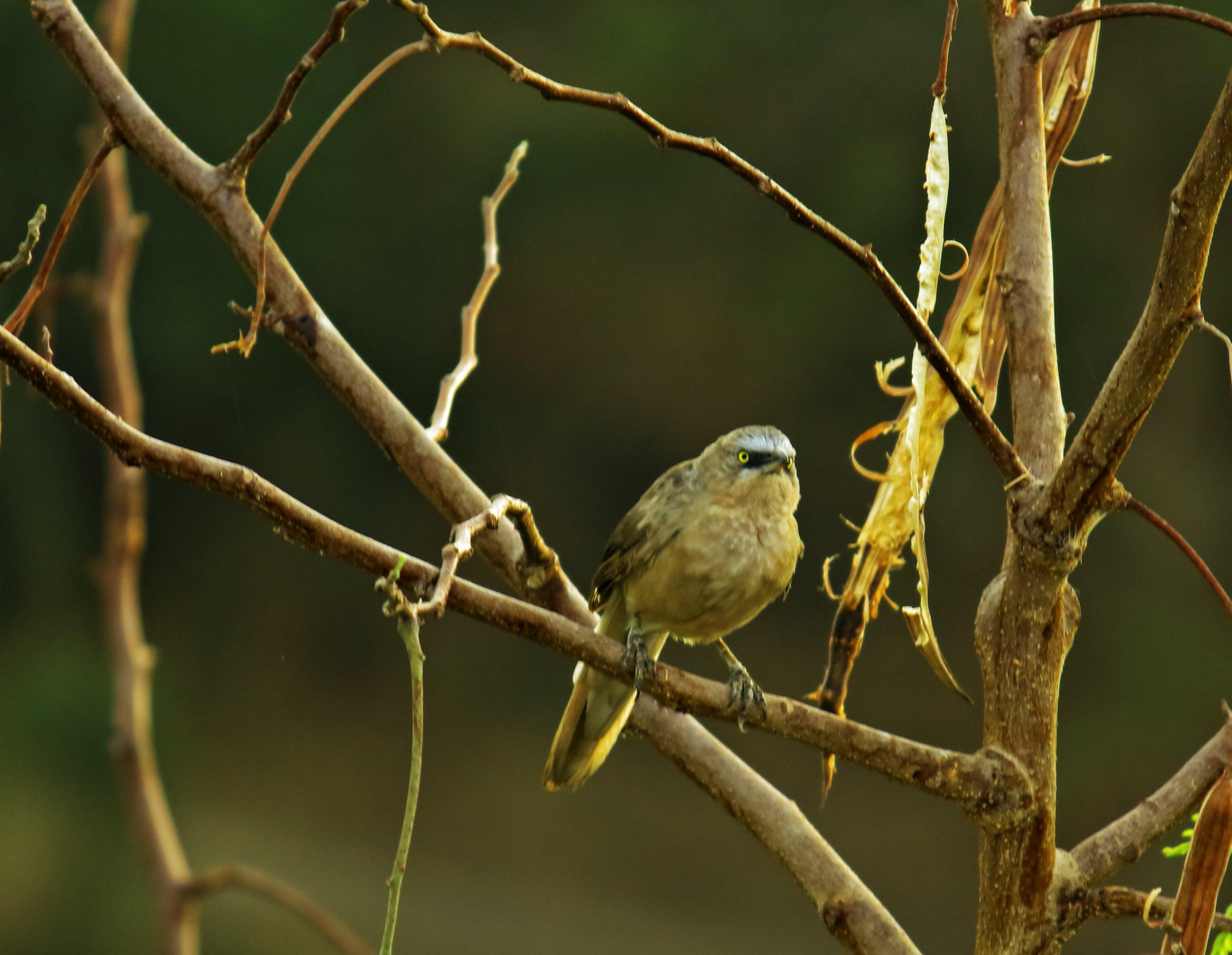Gratis stockfoto met #your_best_birds #bird #birds #birdsofinstagram #b