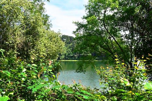 Бесплатное стоковое фото с outdors, деревья, заводы, зеленые растения