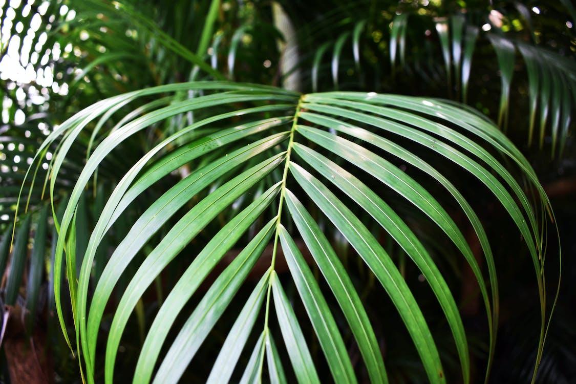 녹색, 식물