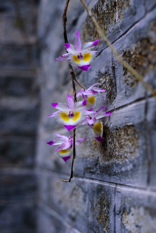Ingyenes stockfotó orchideák témában