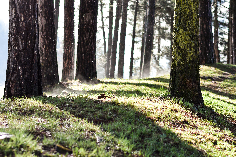 ağaç gövdeleri, ağaçlar, çekilmiş, çim içeren Ücretsiz stok fotoğraf
