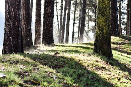 地面, 樹幹, 樹木, 草 的 免费素材照片