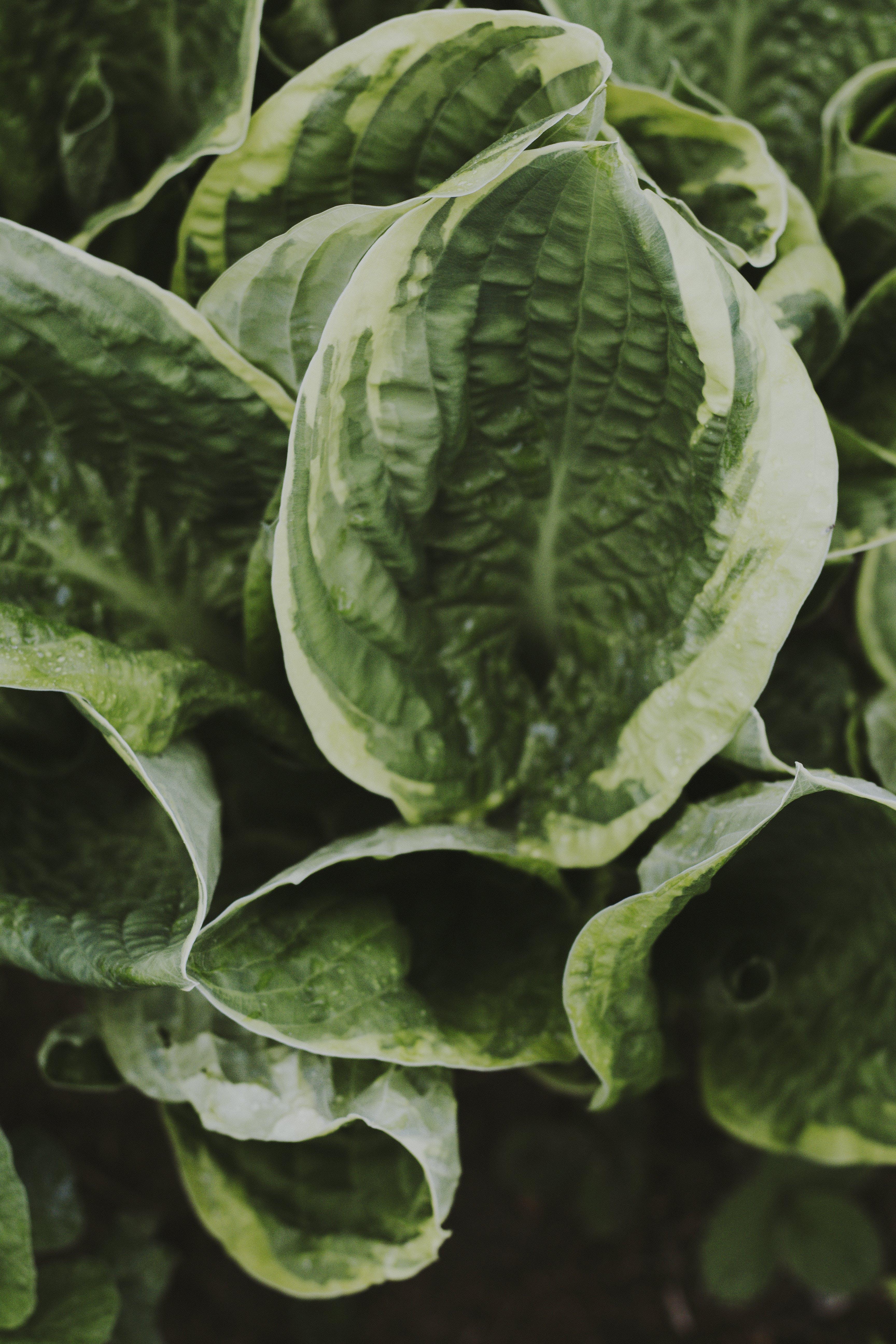 คลังภาพถ่ายฟรี ของ การเจริญเติบโต, พืช, สีเขียว
