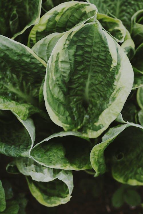 Ilmainen kuvapankkikuva tunnisteilla kasvi, kasvu, vihreä