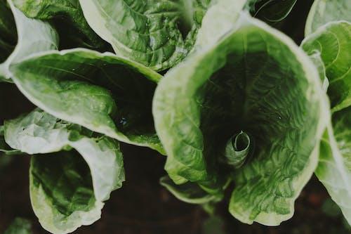 Základová fotografie zdarma na téma rostlina, zelená