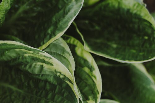 Fotografie bez autorských poplatků na téma listy, rostlina, závod, zblízka
