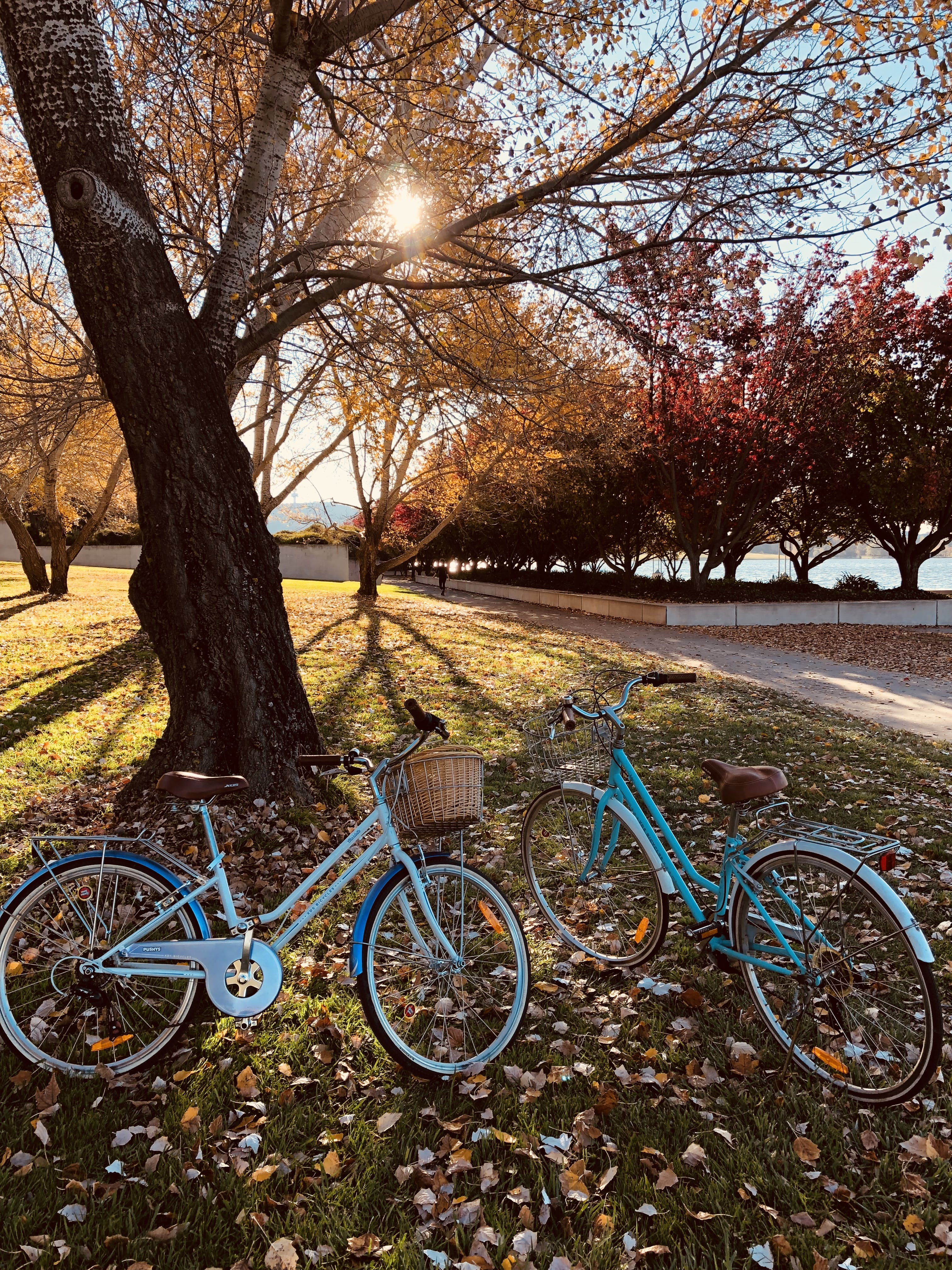 Two Teal Bicycles Near A Tree