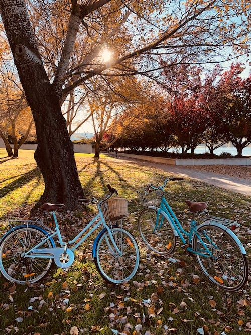 Foto d'estoc gratuïta de arbre, bicicletes, parc, temporada