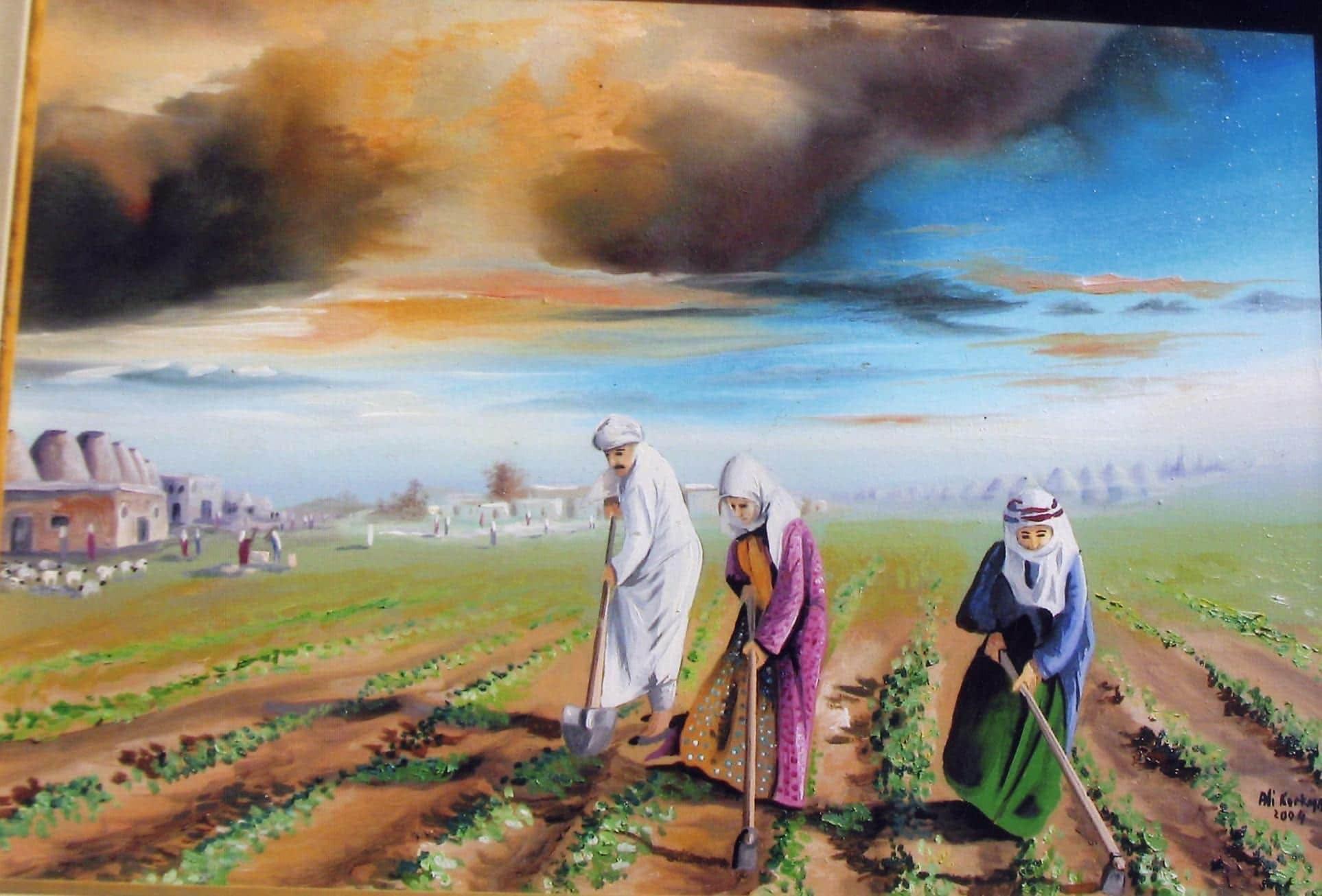 Free stock photo of arap, Şanlıurfa, çiftçilik, çiftlik