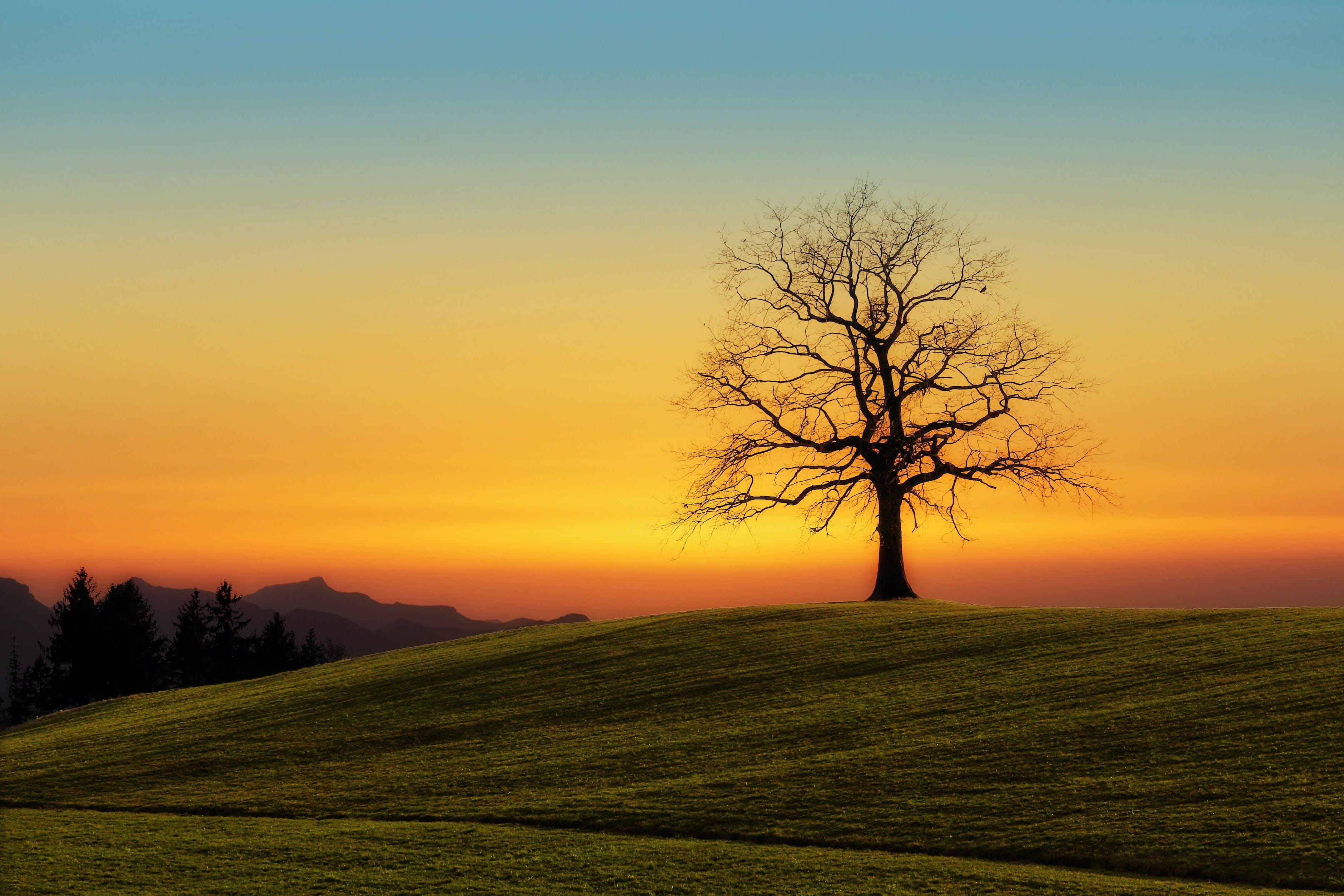 Leafless Tree On Grass Field