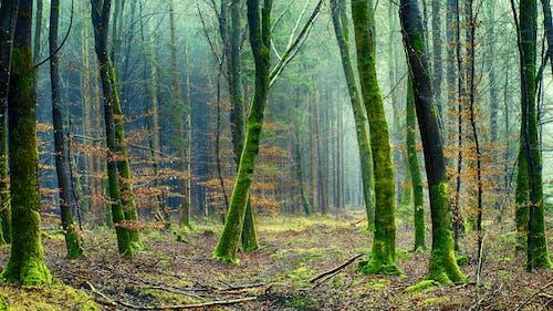 Gratis stockfoto met Bos, bossen, milieu