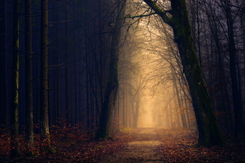 Trees Near Pathway
