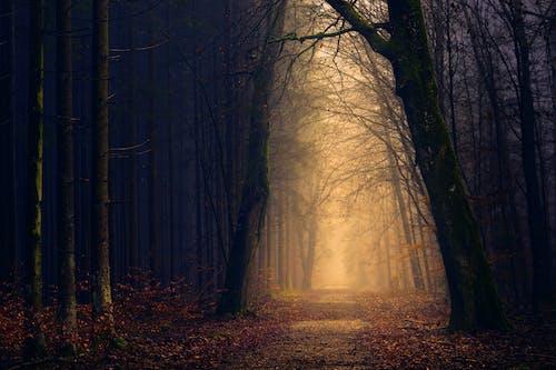 Fotobanka sbezplatnými fotkami na tému hmla, jeseň, les, podsvietený