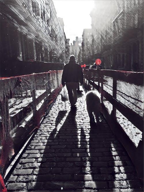 Základová fotografie zdarma na téma město new york, městský, pes, ulice