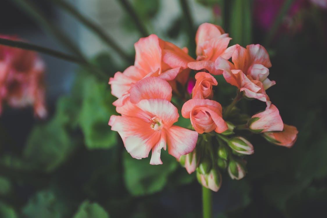 กลีบดอก, กลีบดอกไม้, ดอกไม้