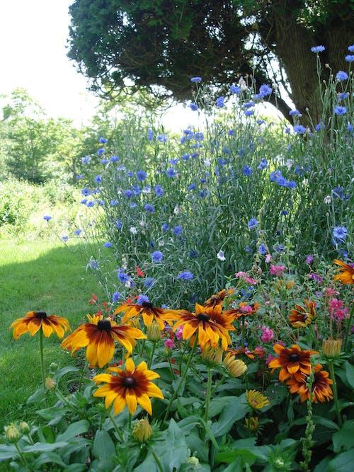Základová fotografie zdarma na téma luční květiny, zahrada
